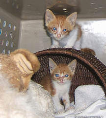 two rescued kittens